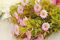 Ромашка букет (розовый), 35см пластик (цветок 2,5 см), упак 2шт