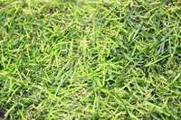 Газон искусственный 50*50 см (+-3), цв. зеленый, упак. 1 шт